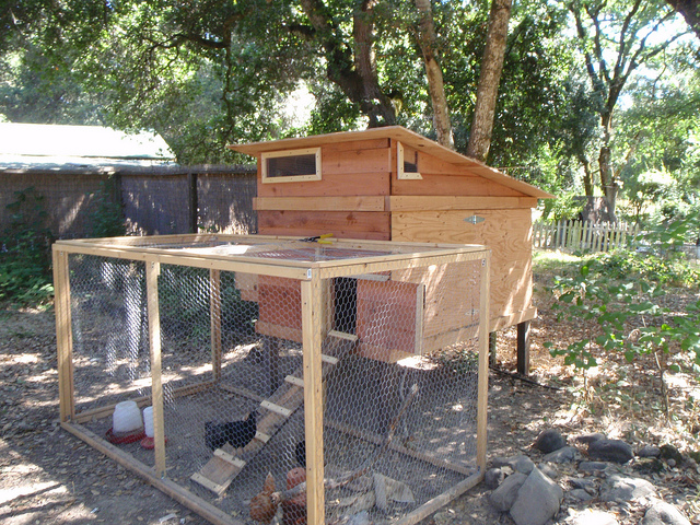 Wondering how to build a chicken coop like this?