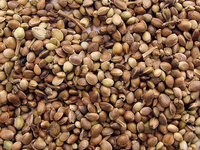 640px-Marijuana_seeds